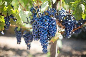 New Mexico wine region
