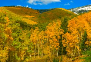 New Mexico Fall Foliage